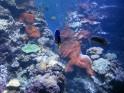 Unterwasserwelt in Samoa