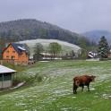 Schneeflecken in Rittersgrün